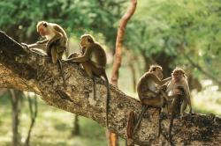 Opičí ostrov obrazok