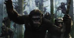 Úsvit planéty opíc obrazok