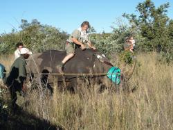 Nosorožci ze zkumavky