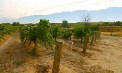 Putování za vínem