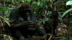 Království divočiny: Podivuhodná zvířata (10/12) obrazok