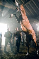 Vojnový kôň obrazok