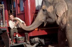 Voda pre slony obrazok