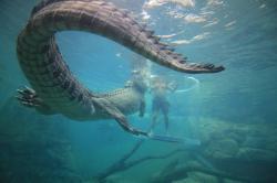 Po stopách australských divokých zvířat obrazok