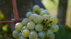 Milovníci vína obrazok