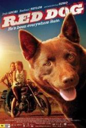 Red Dog - červený pes