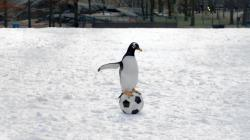 Pán Popper a jeho tučniaky obrazok