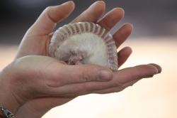 Nejmenší zvířata na světě obrazok