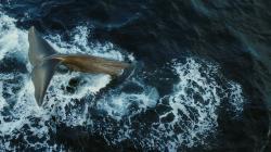 Plasty - zabijáci velryb