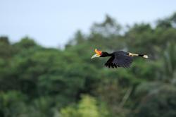 Amazonka východu obrazok