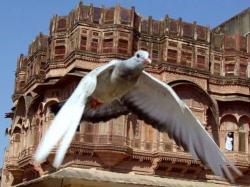 Na ptačích křídlech kolem světa