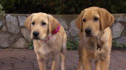 Marley a ja: Keď bol ešte šteňa obrazok