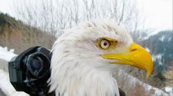 Na ptačích křídlech kolem světa obrazok