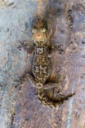 Království divočiny: Madagaskar - laboratoř Země