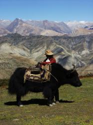 Království Mustang