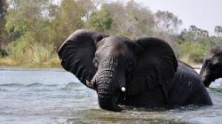 Nejdivočejší Afrika