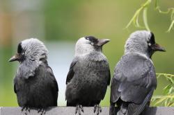 Nejmenší ptáci na světě