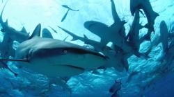 Potápění se žraloky obrazok