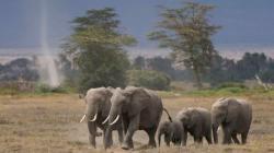 Sloni na útěku