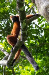 Madagaskar - laboratoř Země