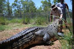 Po stopách australských divokých zvířat