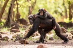 David Attenborough: Zvířecí dynastie (5) obrazok