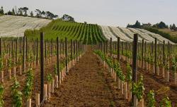 Putování za vínem obrazok