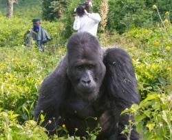 Gorilí tlupa a já